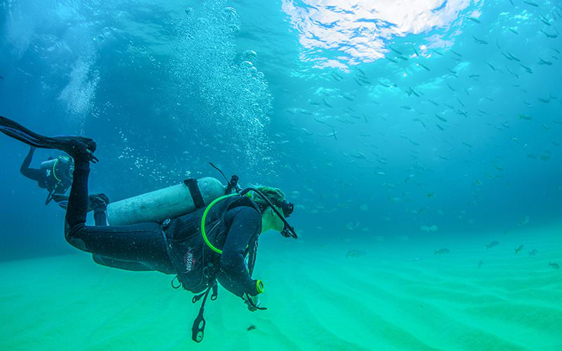 Scuba Diving for certified divers in Puerto Vallarta |