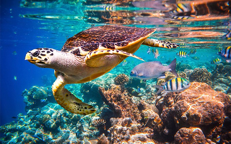 sea turtle and sea life on cabo pulmo scuba dive tour|