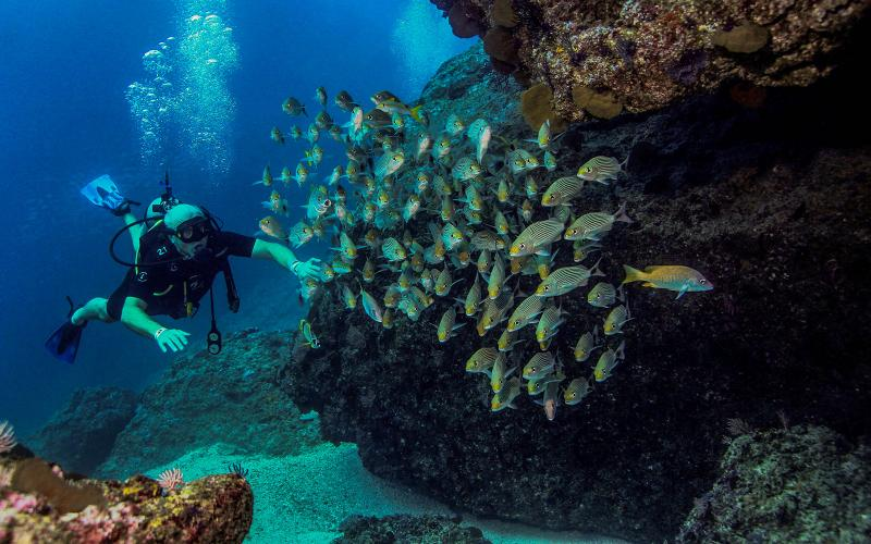 Scuba diving in Puerto Vallarta Mexico |