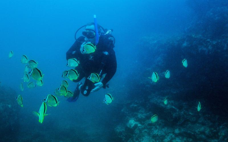 Open water diver referral course in Cabo|