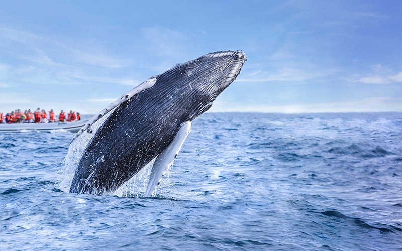 See humpback whales in Cabo|