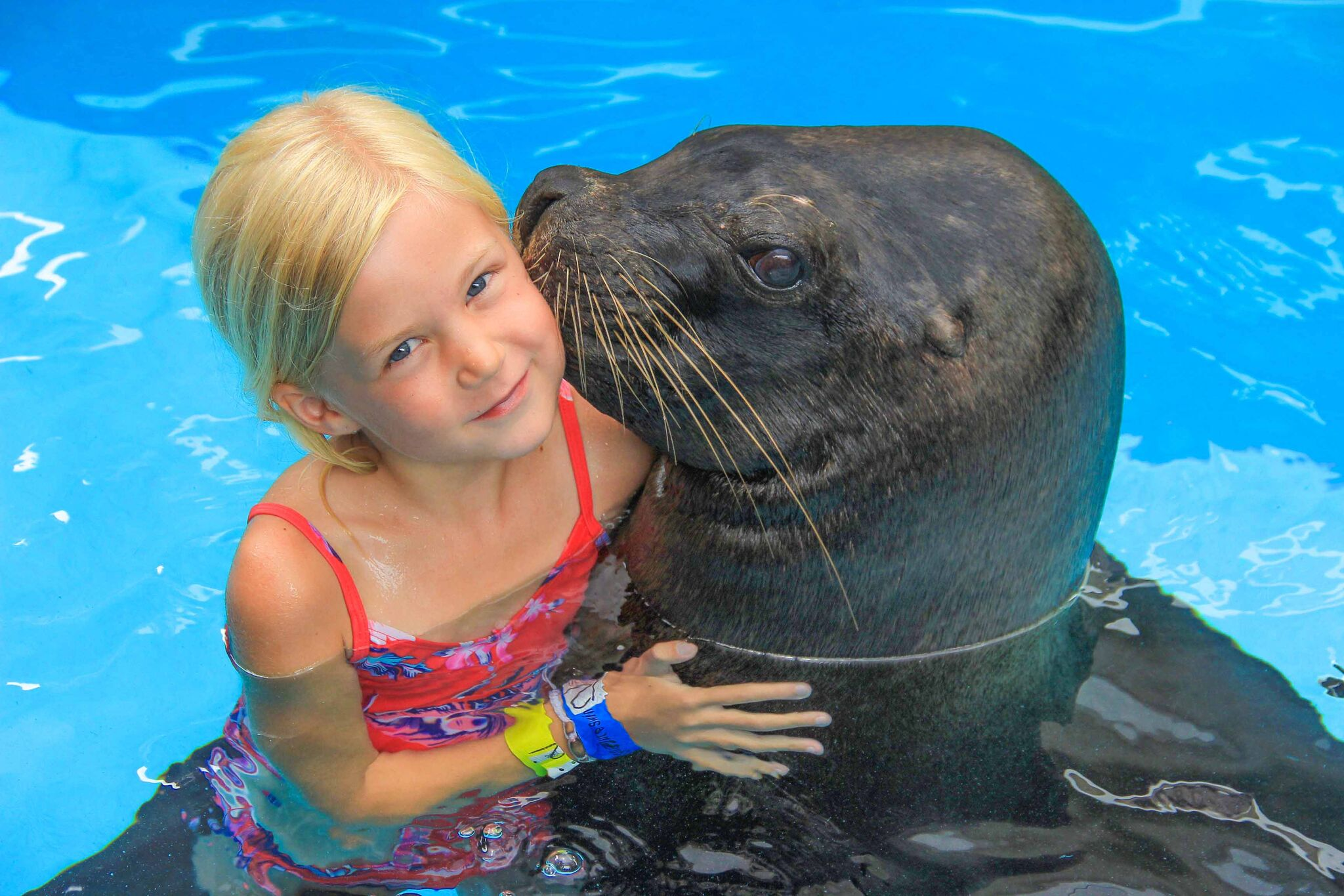 What are Sea Lions? Sea Lion Facts for Kids | Vallarta ...