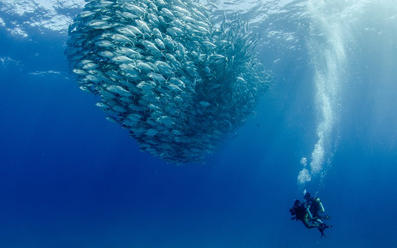 scuba diver next to school of fish in Cabo Pulmo|