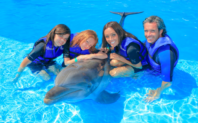 Dolphin swimming with your family in Cabo|