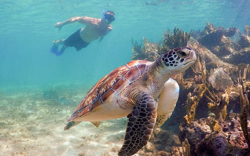 Explore cenotes and swim with turtles in cancun|