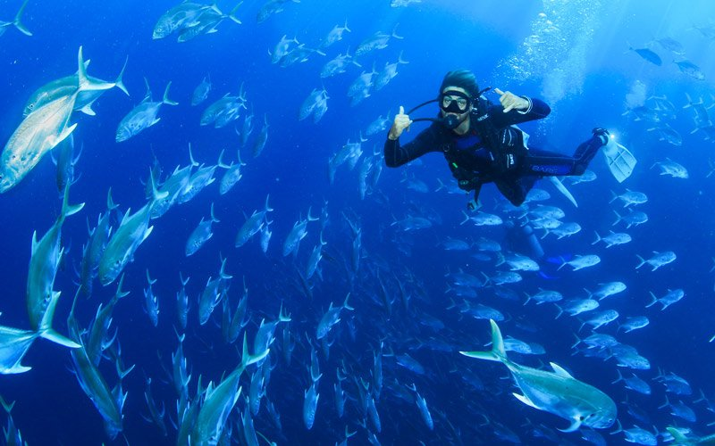 scuba divers underwater on lands end diving tour in cabo|