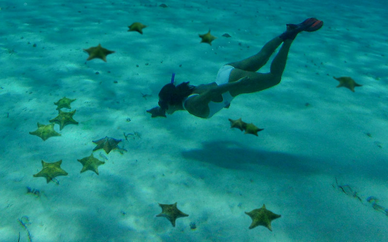snorkel among starfish with cancun adventures|