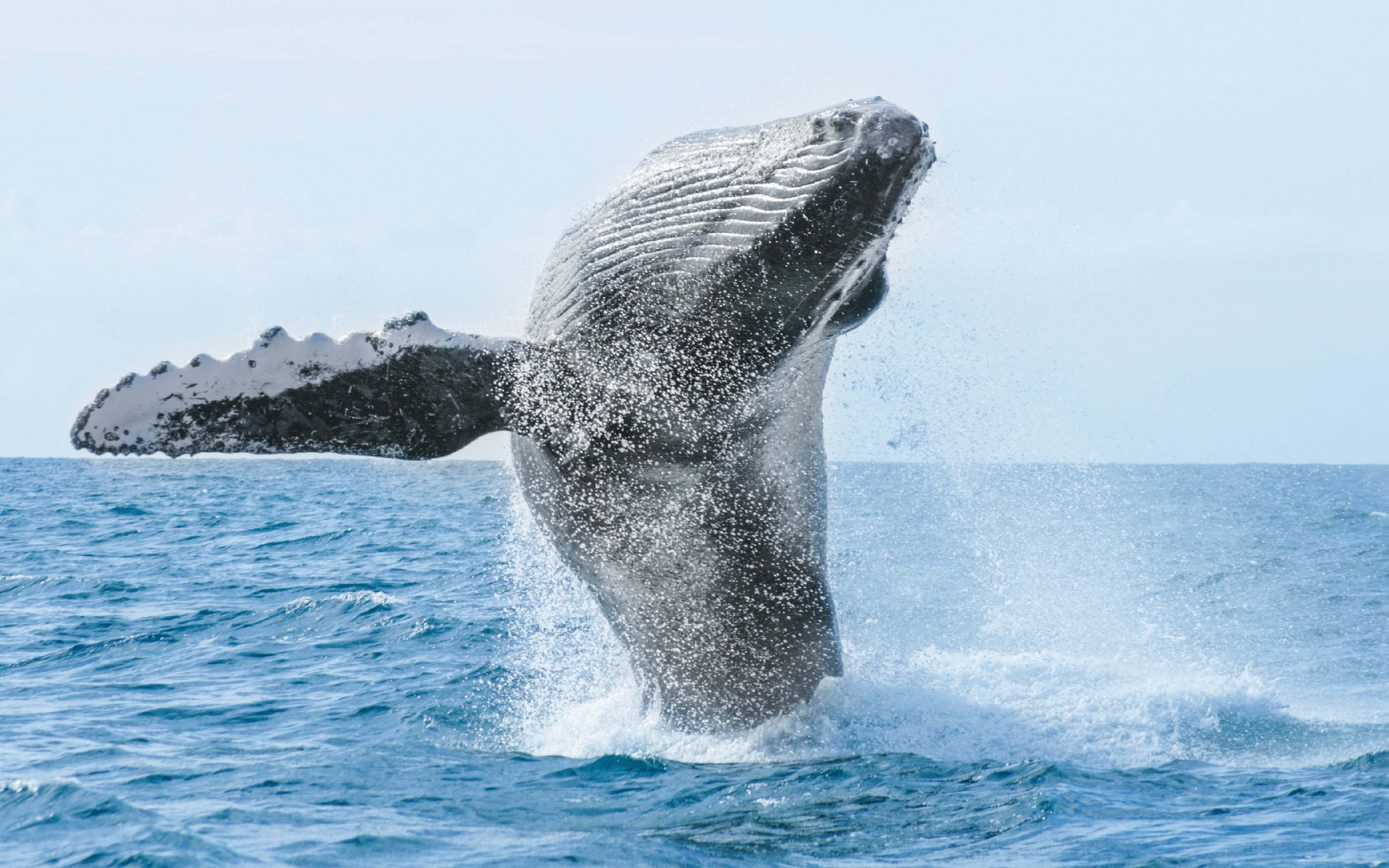 private whale watching in punta mita|