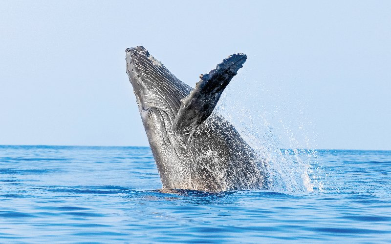 Whale watching tour with Vallarta Adventures|