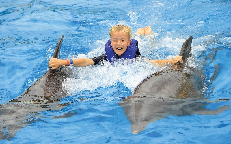Swim with dolphins in Puerto Vallarta at Cancun Adventures' humane Dolphin Center on the Dolphin Signature Swim tour.|