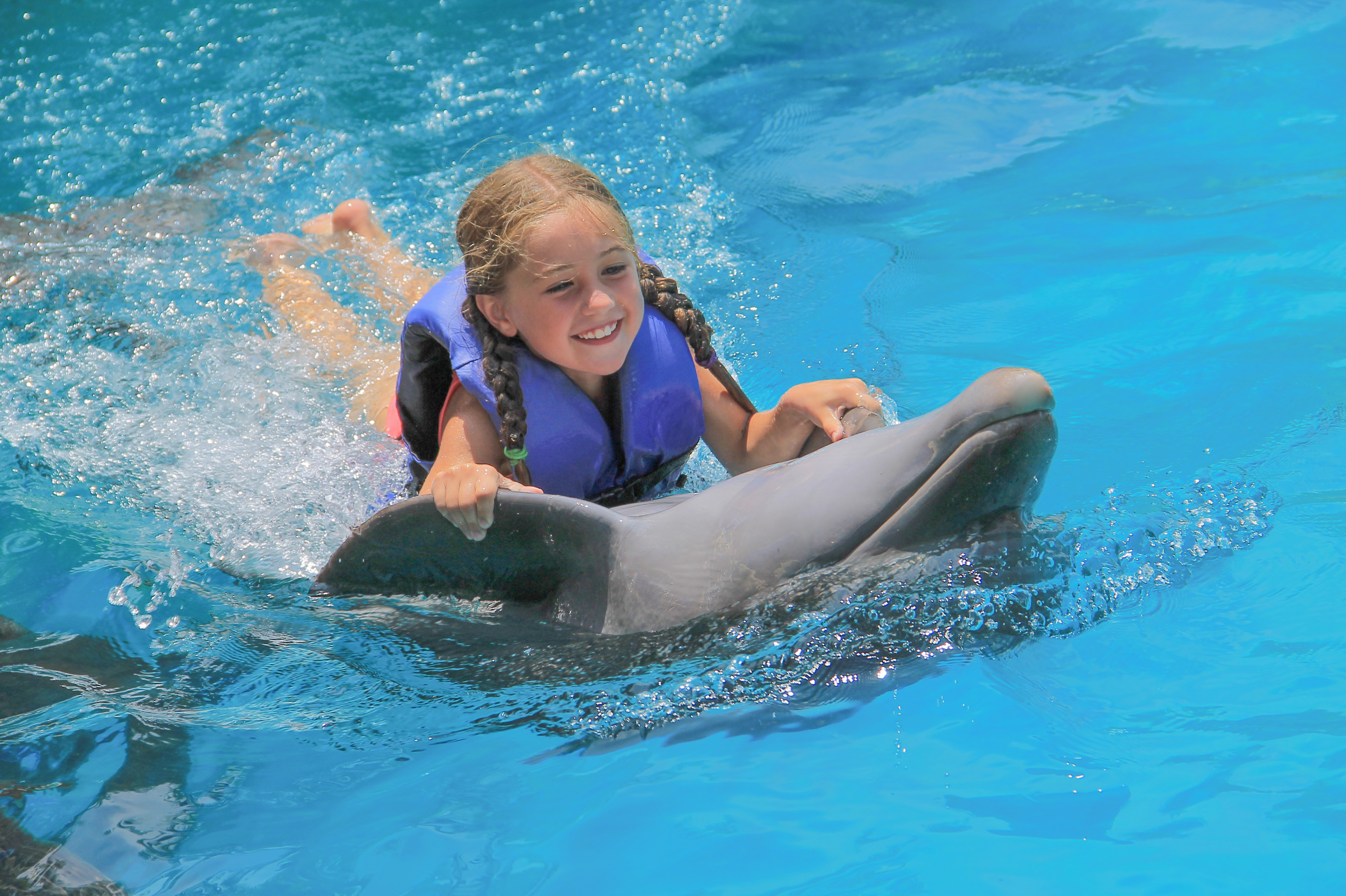 little girl taking a dolphin ride