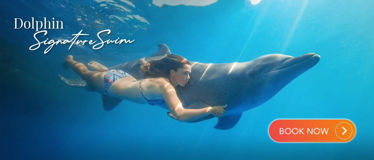 Dolphin Signature Swim | Cabo Adventures