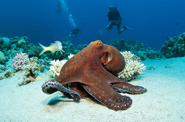 Interesting Facts about Octopus