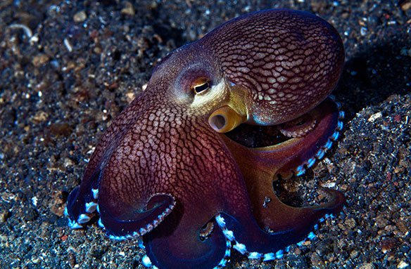 How smart is the average octopus?