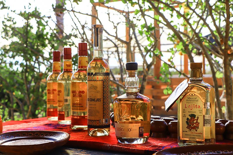 taste different kinds of mezcal with cabo adventures