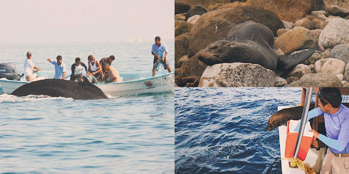 *More than 60 marine mammals were rescued, rehabilitated and released in the ocean.