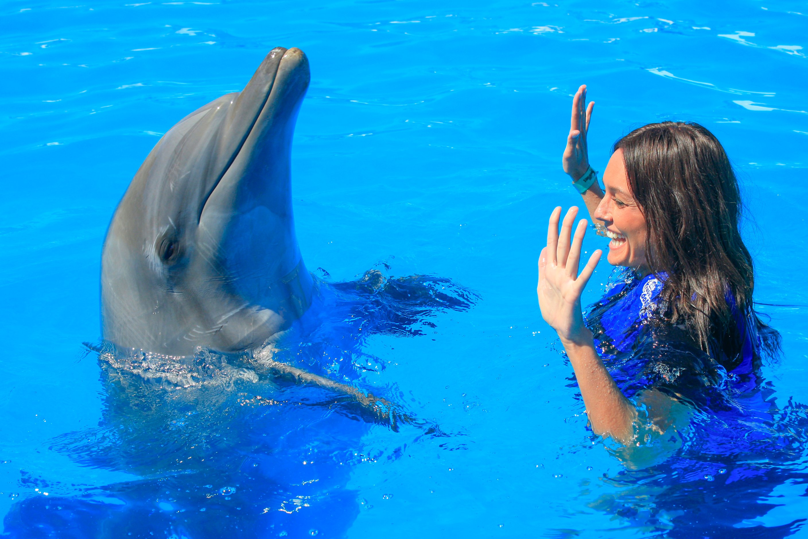 Dolphin interaction | Vallarta Adventures