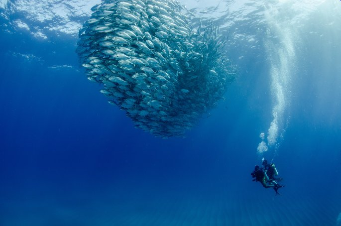 Scuba diving by a school of fish