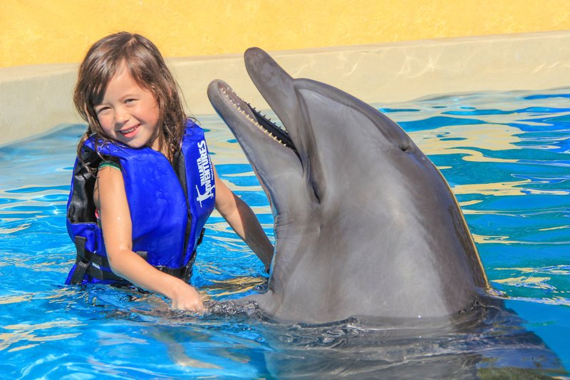 girl playing with dolphin on vallarta adventures dolphin kids tour