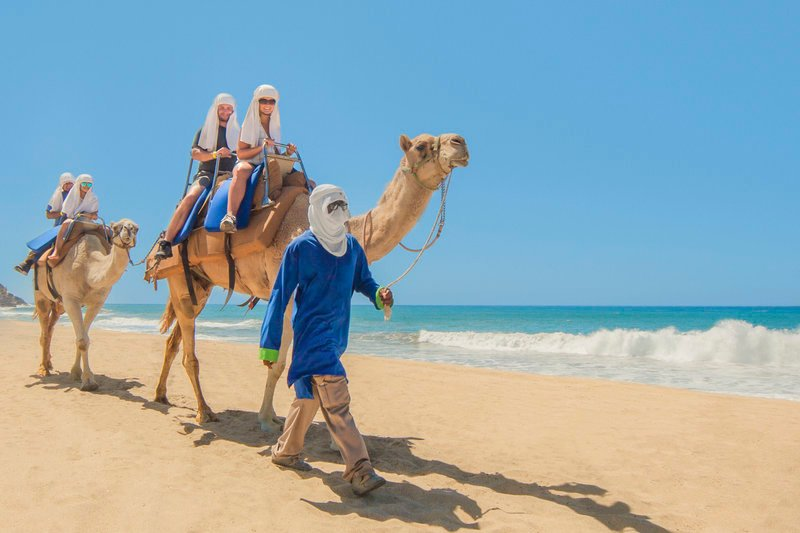 cabo vacationers on camel ride next to ocean
