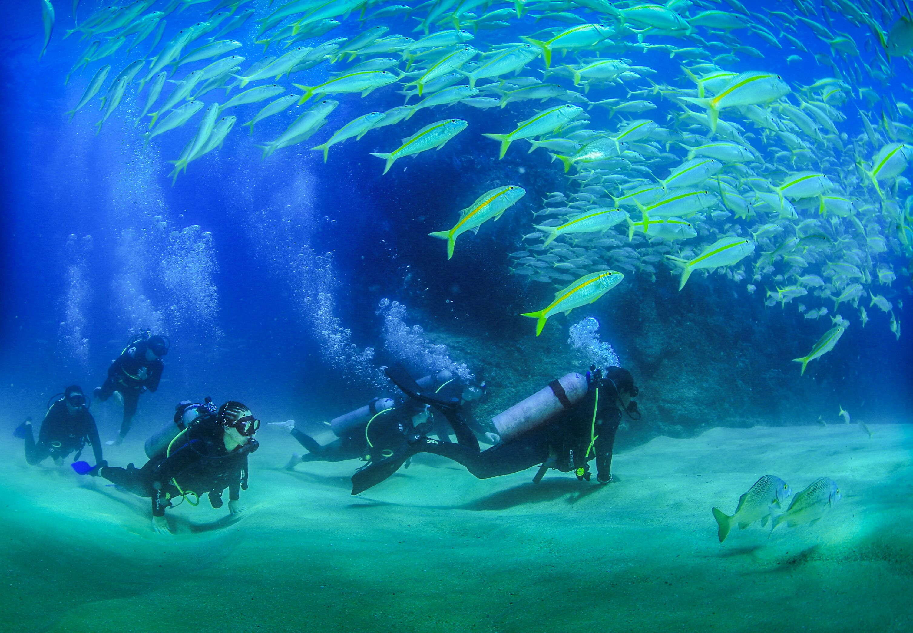 a group of people scuba diving in the sea of cortez