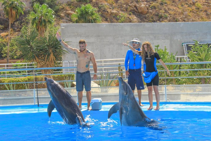 Dolphins being trained
