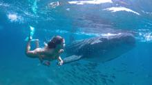 woman swimming along side a whale shark in cabo mexico