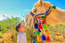 camel kiss in cabo